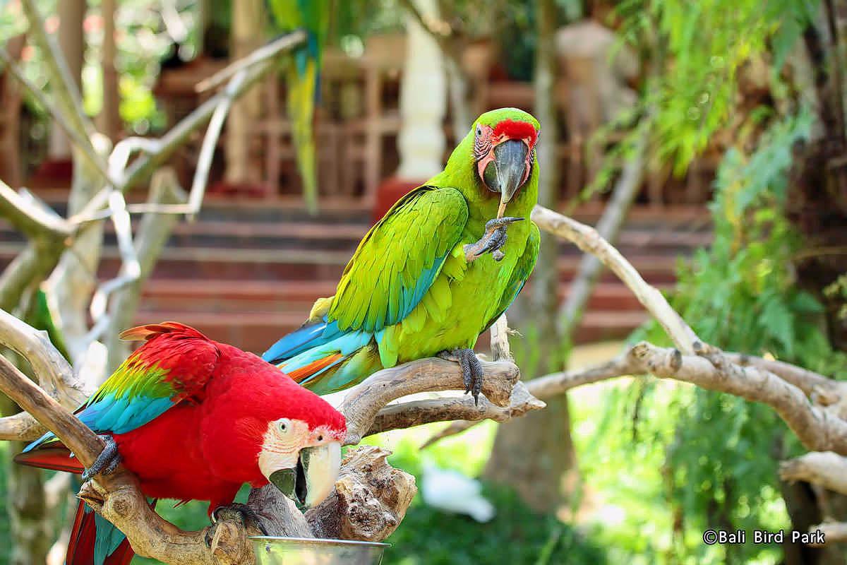 Visit Bali Bird Park