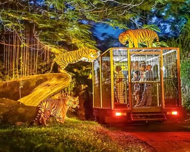 Bali Safari and Marine Park Tickets - Flat 20% off