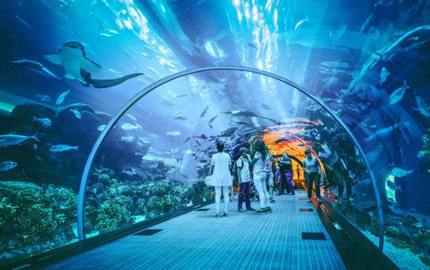 1562571474_visit_dubai_aquarium___underwater_zoo.png