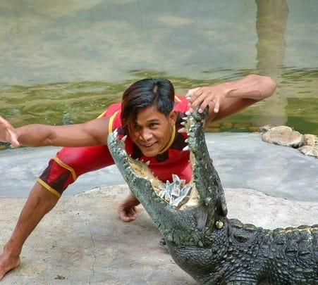 Crocodile Farm and Elephant Show in Bangkok Flat 30% off