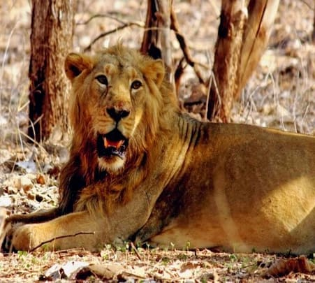 Safari Tour of Gir Wildlife Sanctuary in Gujarat
