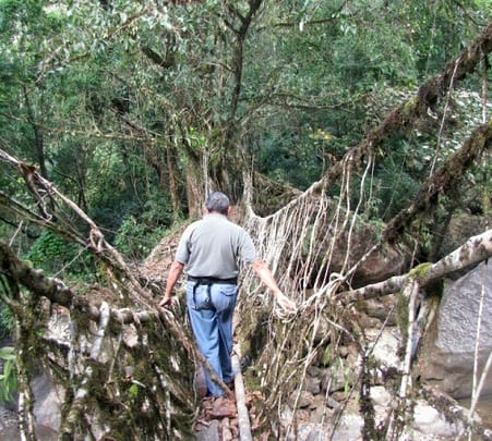 Double Decker Root Bridge Trek at Cherrapunjee in Meghalaya