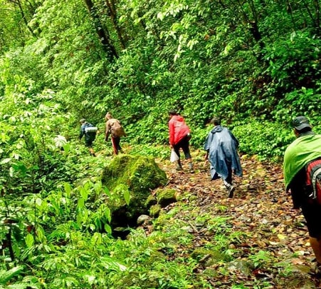 Trekking in Pambadum Shola National Park