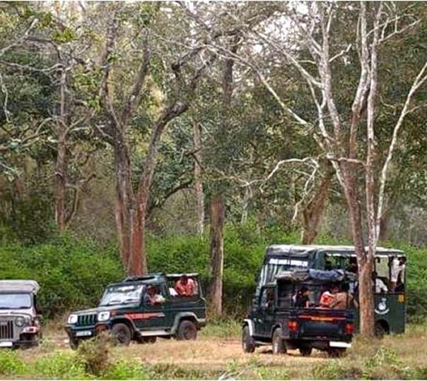 Chinnar Night Safari In Munnar