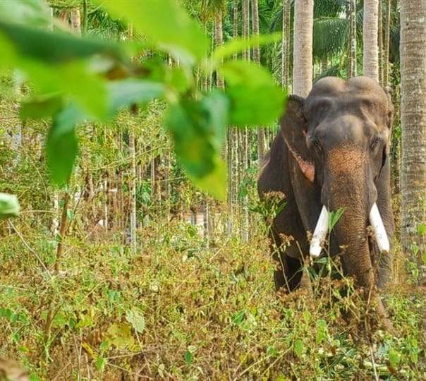 Wildlife Tour in Kerala for 2 Days