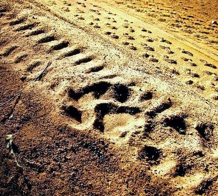 Anamalai Tiger Trail