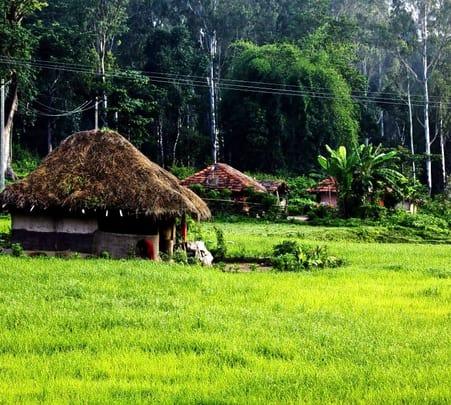 Walk in Kuruva Island, Wayanad