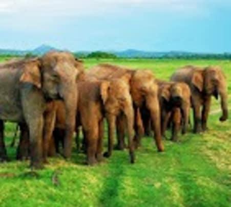 Day Excursion to Mineriya and Polonnaruwa