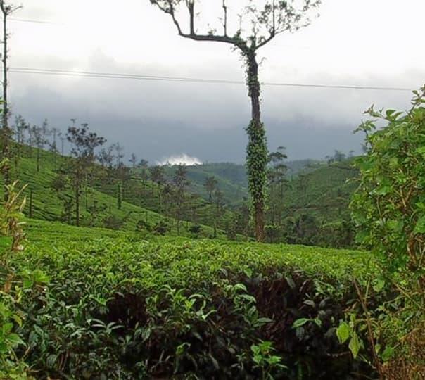 Wayanad Spice Trail