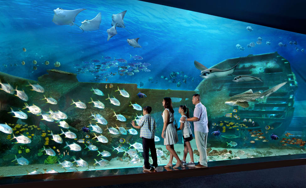 S E A  Aquarium Singapore Ticket Flat 25% Off