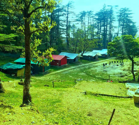 Camping Amidst Deodar Forest in Mussoorie Flat 18% off
