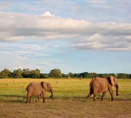 Zambia Adventure Safari (fixed Departure Sep)