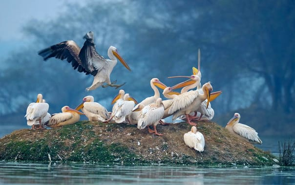 1571482134_isle-of-pelicans-keoladeo-ghana-national-park-bharatpur-india-desktop-wallpaper-hd-2560x1440-1920x1200.jpg