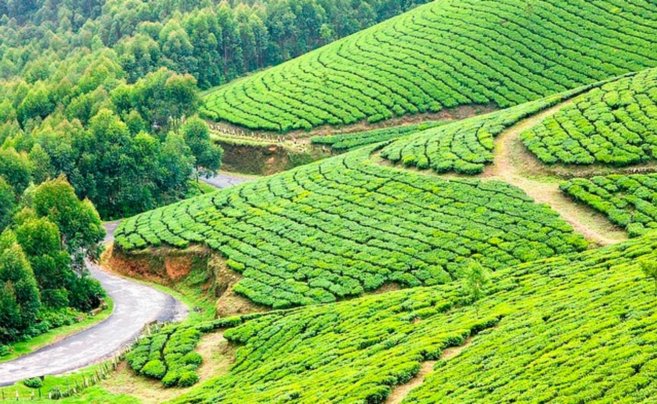 9 Day Kerala Tour Thrillophilia