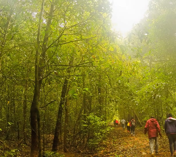 Agumbe Trekking with Waterfall Visit