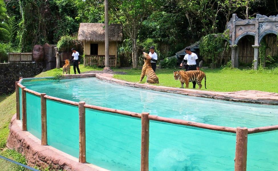 Bali Safari And Marine Park Tickets Flat 20% Off