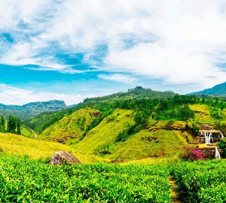 Trip to Horton Plains and Pedro Tea Factory