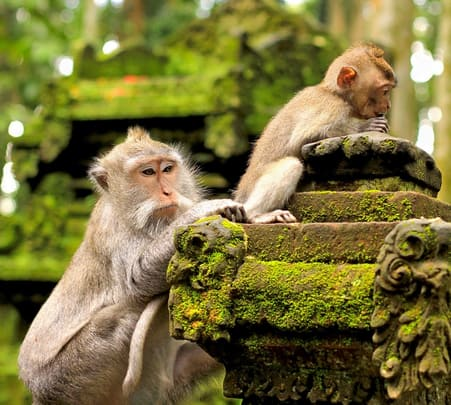 Monkey Forest and Ubud Sightseeing Tour in Bali
